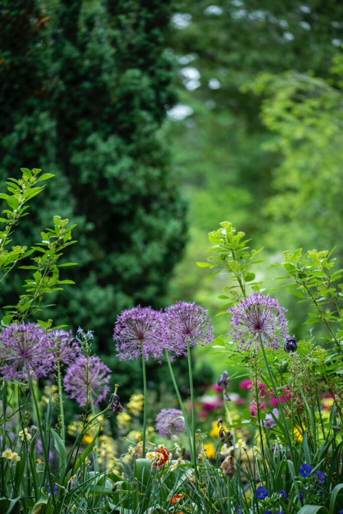 keep the garden clean and tidy