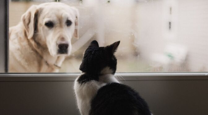 tenant with pets