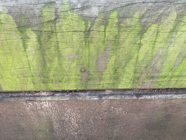 Mould on a small retaining wall during wet weather
