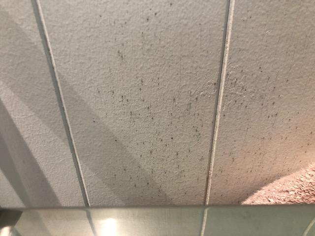 Mould on ensuite wall behind heated towel rack during rainy season